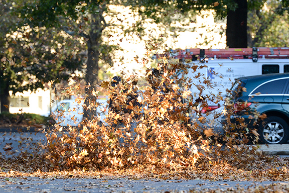 Leaf-Attack-East-Hartford