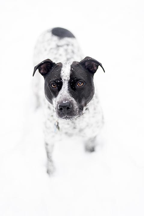 SnowBear_w